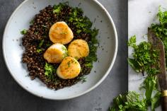 Coquilles St.-Jacques on a bed of balsamic lentils